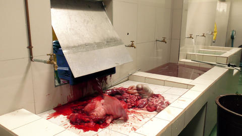 Animal internal organs are dumped into the cleaning tray Footage