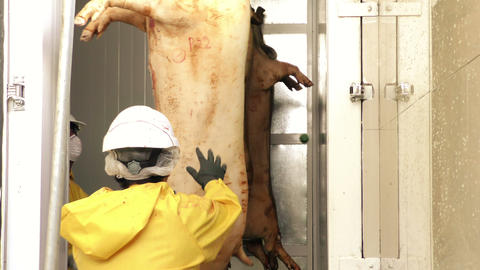 Animal Carcasses Being Introduced Into Refrigeration Chamber In A Butchery stock footage