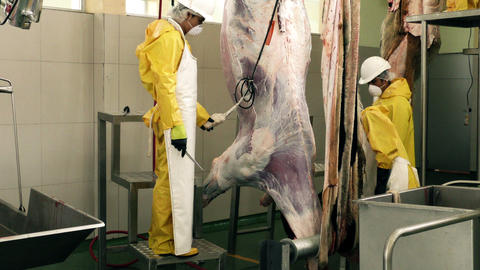 Workers skinning a cattle using power tools in a butchery Footage
