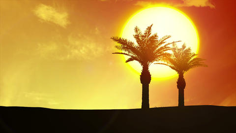 Tropical Sunrise, Palm Trees, Clouds - 4k Sunset stock footage