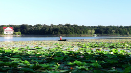 Man Clearing Lotus Leaves To Make The Path For Boats stock footage