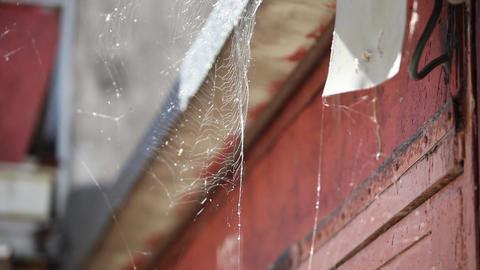 Spider Web Sways In The Wind stock footage