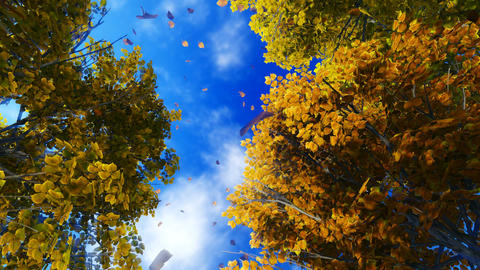 Motion Through Falling Autumn Leaves stock footage