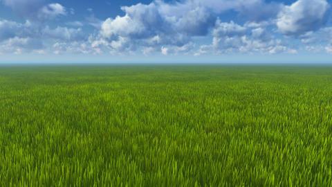Motion To Horizon Through Green Grass stock footage
