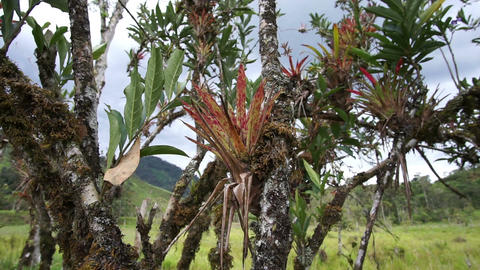 Andes Rainforest Plantlife Pan Footage
