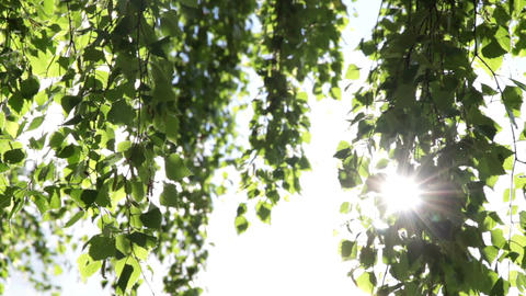 Green leaves and sunlight Footage