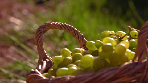Grapes In A Basket In Slow Motion stock footage