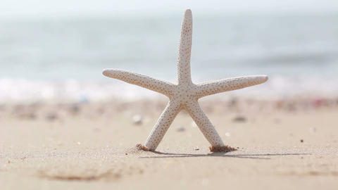 HD footage of starfish on the summer sandy beach Footage