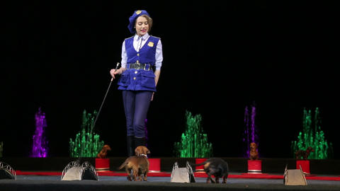 Girl performing with two trained dogs Footage