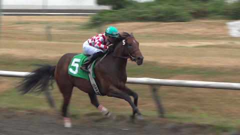 Horse Derby - Racing Jockey Live Action