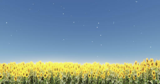 4k Sunflower & Shine Sun Rays,Dandelion Floating In The Mid Air,field Scener stock footage