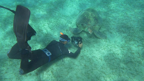 Making Turtle's Close-up Footage