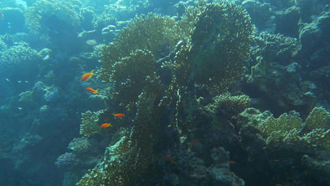 Sun-Drenched Coral Reef Footage