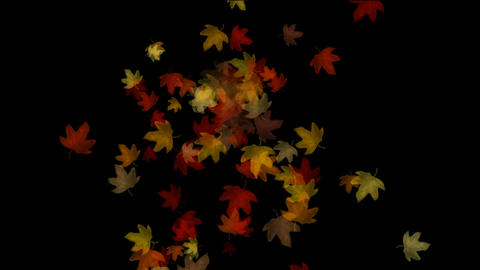 Maple leafs falling background,Alpha Channel.pattern,symbol,idea,creativity,creative,vj,beautiful,ar Animation