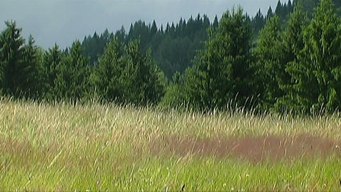 Countryside in Styria Stock Video Footage