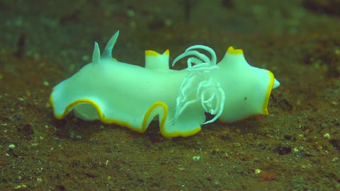 Nudibranch Stock Video Footage