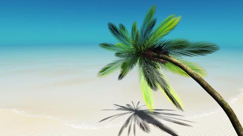 椰子の木 Stock Video Footage