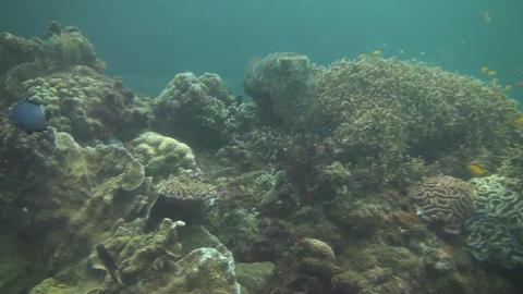 Broadclub cuttlefish Stock Video Footage