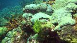 Coral reef Footage