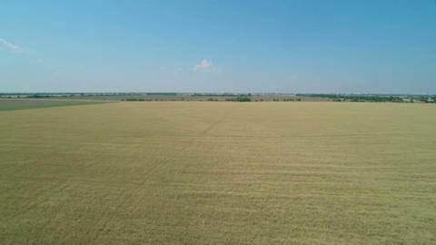 Flight Over The Wheat Field stock footage