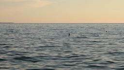 buoys on sea Footage