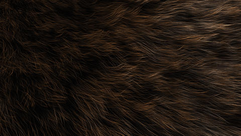 Animal fur close up, animal, decoration, detail, fluffy, hair Animation