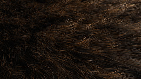 Artist rendering, Animal fur close up Animation