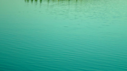 Lacustrine Landscape.Green Forest Reflections On Rippling Lake Waters,Tilt Footage