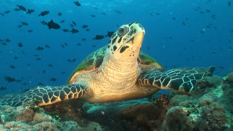 Close up turtle Footage