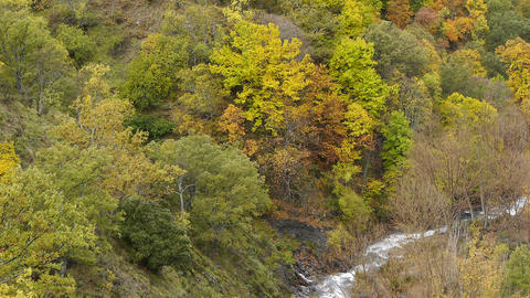 Genil River, Bordered By The Forest In Autumn stock footage