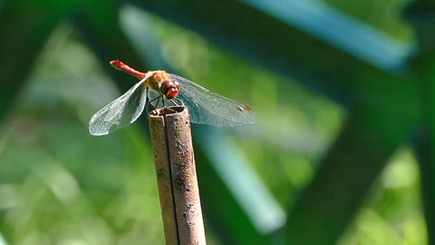 Dragonfly sits on the tube Footage