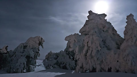 timelapse of frozen trees Live Action