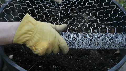 unrolling chicken wire Live Action