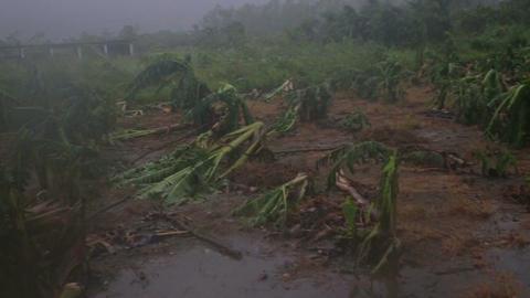 Debri and fallen trees in Typhoon Souledor, Taiwan, August 2015 Footage