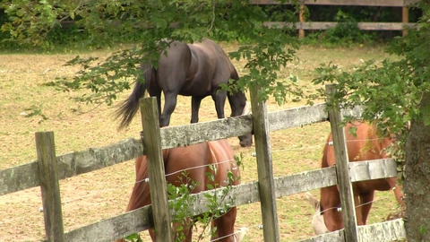 Horses grazing at farmers ranch 2 Footage
