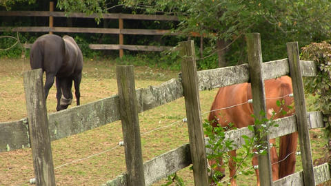 Horses grazing at farmers ranch 4 Footage