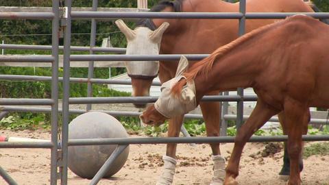 Horse flirt 3 Footage