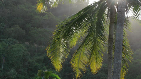 Palm leaves and plants swaying in the wind with dazzling sun Footage