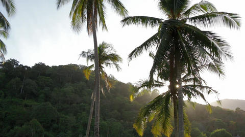 Coconut palm leaves swaying in the wind Footage