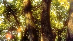 Enchanted Eerie Trees 1 Animation