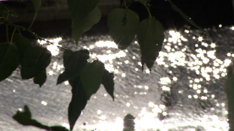 Rain and leaves with glimpses of the sun on the road and cars Footage