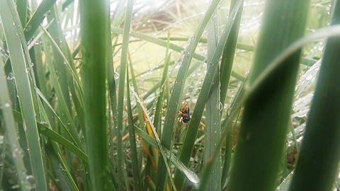 insects after rain green grass macro close up in the highlands near the river Footage