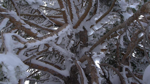 Branches And Snow stock footage