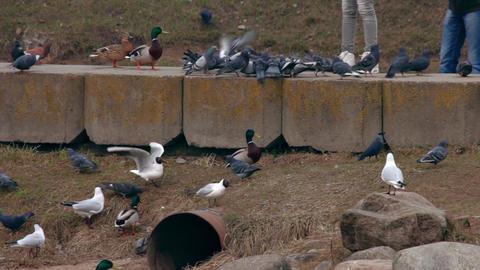 1080p Feeding Birds Footage