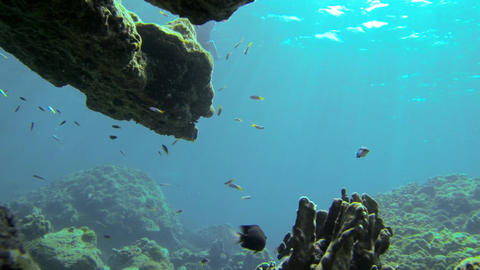 Snorkeling free diver at an undersea cliff Footage