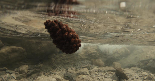 pine cone floats under water near a mountain waterfall Footage