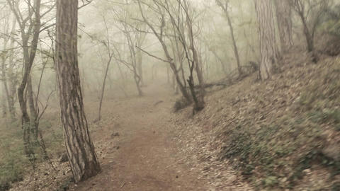 first-person view - someone goes through the misty woods in the mountains Archivo