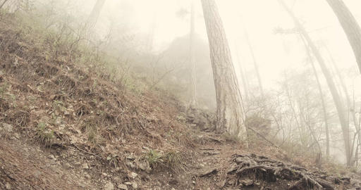 slope of a mountain pine forest in the dense thick fog Footage