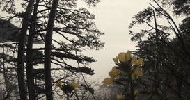 fog in the mountain coniferous forest and yellow flowers in the foreground Footage