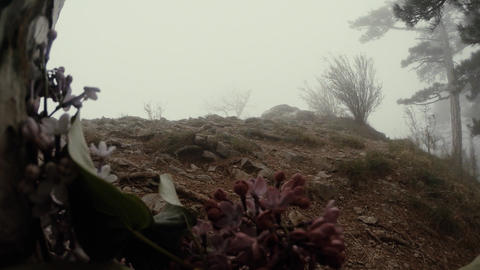Evening spring flowers, small hills and pine trees in thick fog Footage